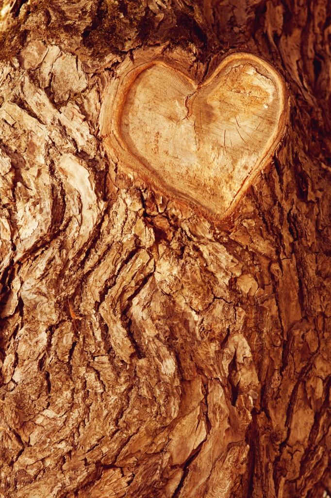Wood Anniversary