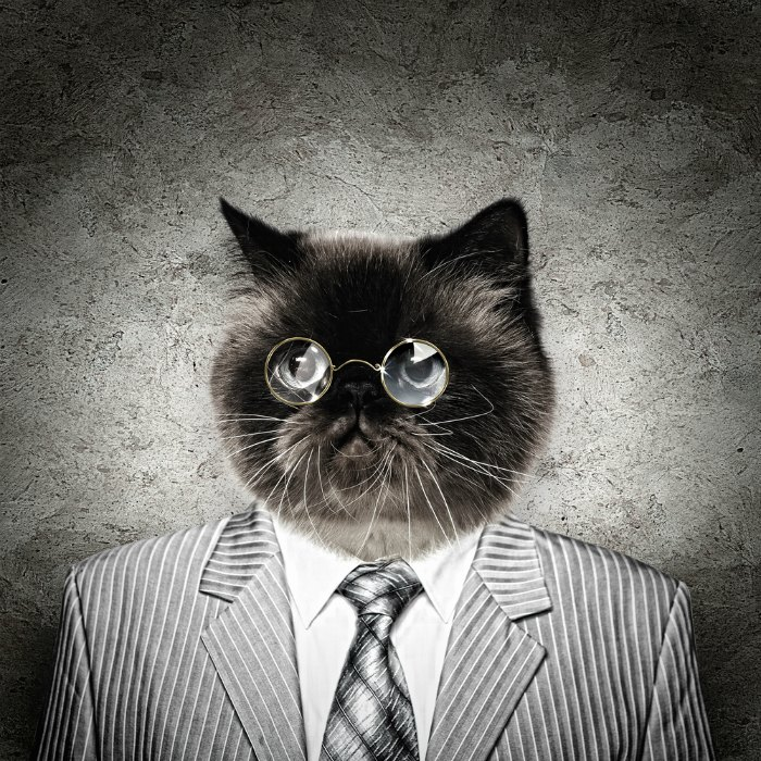 Law-cat