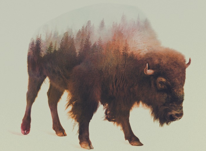 Bison by Andrea Lie, a leading double exposure visual artist