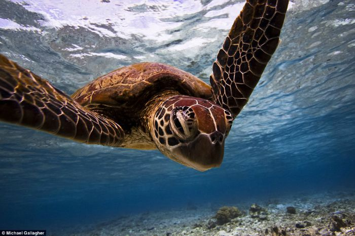 Turtle Portrait by Michael Gallagher
