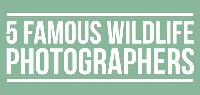 5 Famous Wildlife Photographers