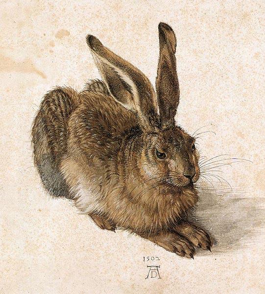 young-hare-albrecht-durer