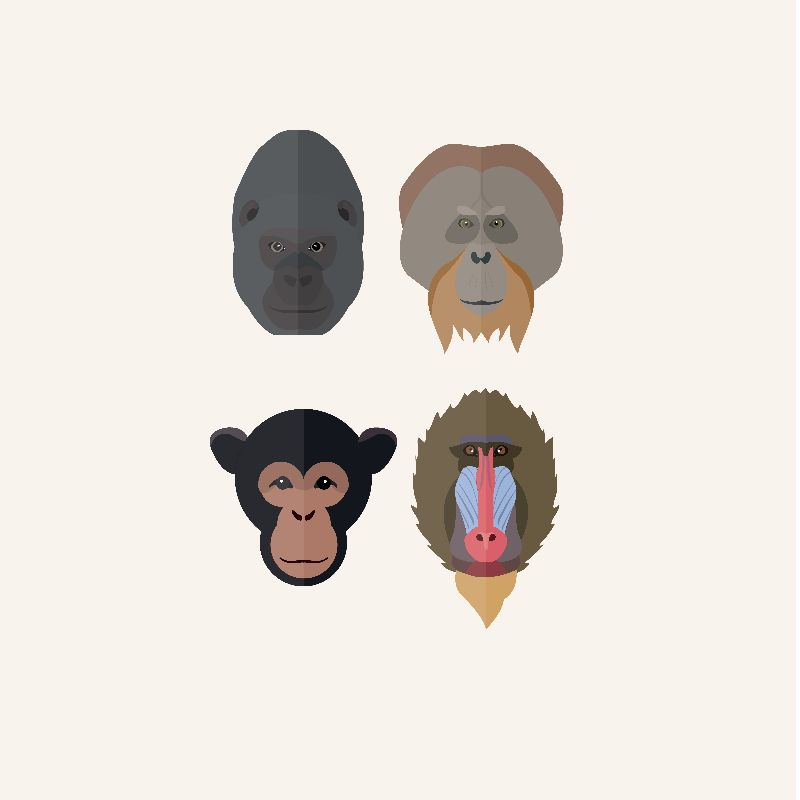 monkey-ape-portraits