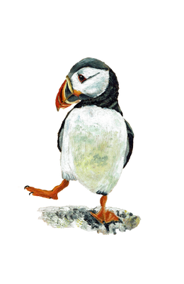 dancing puffin by inuro